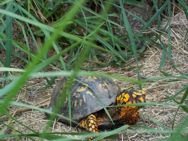 turtle-marsh