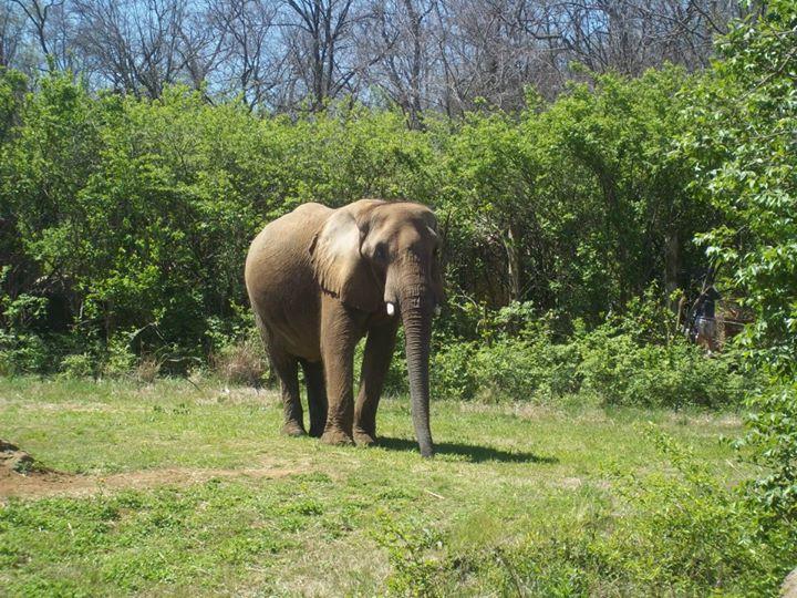 2013_Nashville Elephant