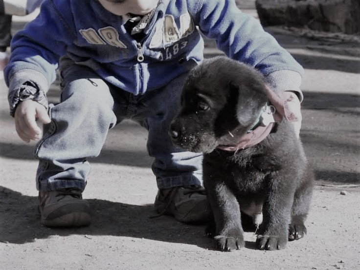 Maxi and puppy