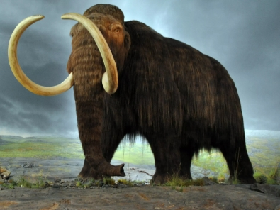 woolly_mammoth_bfi